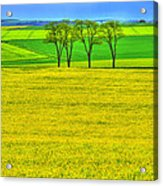 Fields Of Dreams Acrylic Print