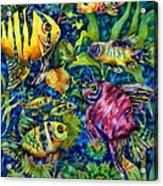 Fish Tales IIi Acrylic Print
