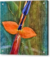 Floral Contentment Acrylic Print