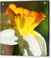 Floral Cup  Acrylic Print