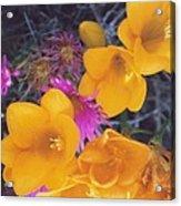 Floral Wonder Acrylic Print by Robert Bray