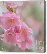 Flower Acrylic Print by Sylvia  Niklasson