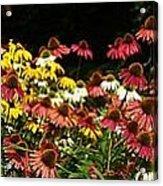 Flowers Gone Wild Acrylic Print