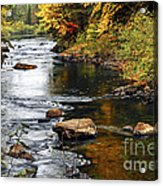 Forest River In The Fall Acrylic Print