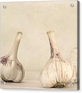 Fresh Garlic Acrylic Print by Priska Wettstein