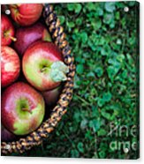 Fresh Picked Apples Acrylic Print