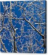Frozen Tree Branches   In  Winter Acrylic Print
