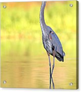 Gbh At First Light Acrylic Print
