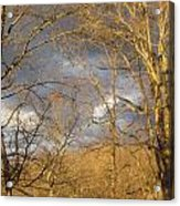 God Made Trees Acrylic Print