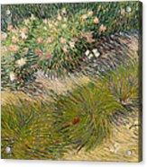 Grass And Butterflies Acrylic Print