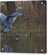Great Blue Water Landing Acrylic Print