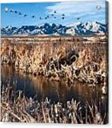 Great Salt Lake Utah Acrylic Print by Utah Images