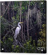 Lowcountry Marsh White Heron Acrylic Print