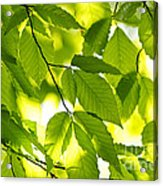Green Spring Leaves Acrylic Print