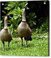 2 Hawaiian Nene Geese Acrylic Print