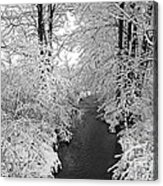 Heavy With Snow Acrylic Print
