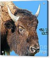 Herd Its Your Birthday Acrylic Print