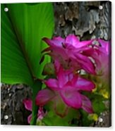 Hidden Lilly Acrylic Print