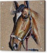 Horse Face - Drawing  Acrylic Print