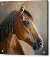 Horse Portrait II Acrylic Print