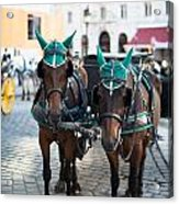 Horses And Carriage In Vienna Acrylic Print