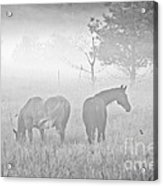 Horses In The Fog Acrylic Print