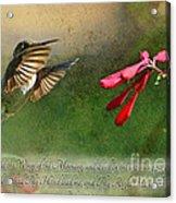 Hummingbird Morning With Verse Acrylic Print