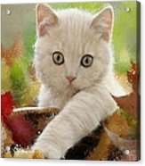 I Love Kittens Acrylic Print