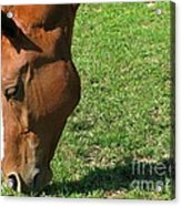 In Green Pasture Acrylic Print