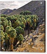 Indian Canyons - California Acrylic Print
