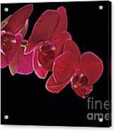 Inspired By Orchids Acrylic Print