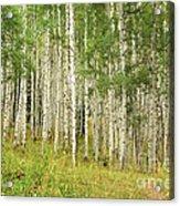 Into The Trees Acrylic Print