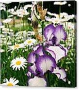 Iris And Daisies Acrylic Print