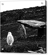 Irish Standing Stones Acrylic Print by Patricia Griffin Brett