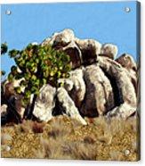 Joshua Tree California Acrylic Print