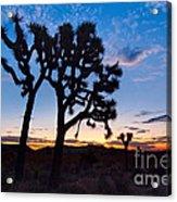 Josua Trees Beautifully Lit During Sunrise In Joshua Tree Nation Acrylic Print