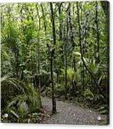 Jungle Trail Acrylic Print