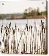 Lake Mattamuskeet Nature Trees And Lants In Spring Time  Acrylic Print