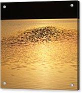 Last Rays Of Light Acrylic Print
