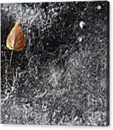 Leaf On Ice Acrylic Print