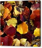 Leaves Of Autumn Acrylic Print