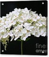 Les Fleurs Acrylic Print