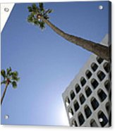 Looking Up In Beverly Hills Acrylic Print