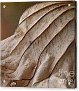 Lotus Leaf Acrylic Print