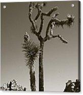 Joshua Tree National Park Landscape No 2 In Sepia Acrylic Print