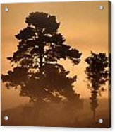 Moorland In The Morning Mist Netherlands Acrylic Print