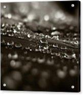 Morning Dew Acrylic Print