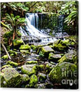 Mt Field National Park Acrylic Print