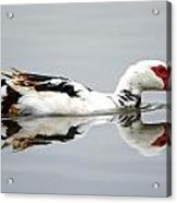 Muscovy Water Reflection Acrylic Print