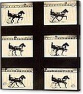 Muybridge Motion Study, 1870s Acrylic Print